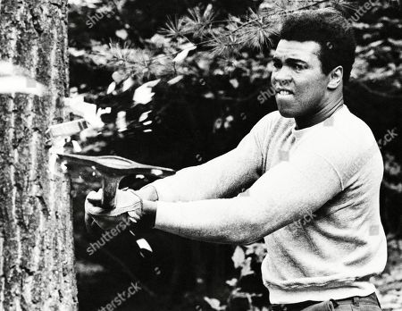 Boxer Muhammad Ali chops at a tree with an axe at his training camp in Deer Lake, Pa., in preparation for his return match against Ken Norton. The rustic Pennsylvania training camp where Ali prepared for some of his most famous fights has undergone an elaborate restoration. The camp in Deer Lake opened to the public as a shrine to his life and career