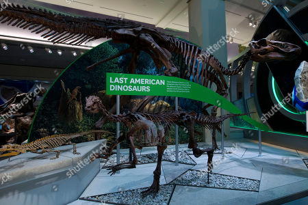 """A Tyrannosaurus rex skeleton is seen on display during the Smithsonian's National Museum of Natural History's """"David H. Koch Hall of Fossils-Deep Time"""" during the exhibit opening day in Washington, . The Smithsonian's National Museum of Natural History reopened its dinosaur and fossil hall to the public, the 31,000-square-foot exhibition hall feature the authentic Tyrannosaurus rex skeleton"""