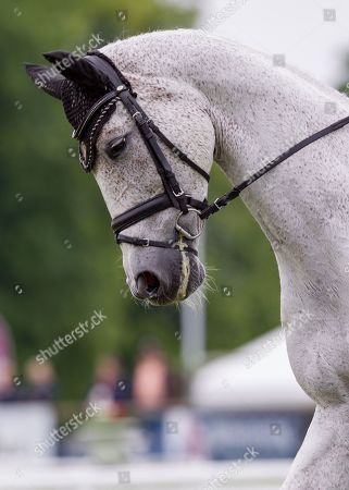 Editorial picture of Bramham International Horse Trials, North Yorkshire, UK - 07 Jun 2019