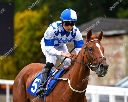 Cambric ridden by Jason Watson goes down to the start  of The Paul Elliott Memorial Handicap during Horse Racing at Salisbury Racecourse on 16th June 2019