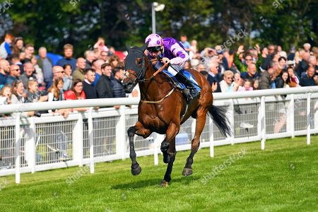 Stock Photo of Winner of The Cara Glass Fillies' Handicap Daddy's Daughter ridden by Robert Winston and trained by Dean Ivory during Horse Racing at Salisbury Racecourse on 16th June 2019