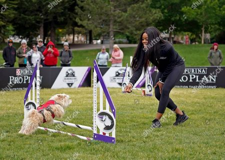 IMAGE DISTRIBUTED FOR PURINA PRO PLAN - Gold Medalist Gabby Douglas and her morkie, Chandler, practice on the agility course at the 22nd Annual Purina Pro Plan Incredible Dog Challenge, which was held in Avon, Colo. on June 21 and 22, 2019