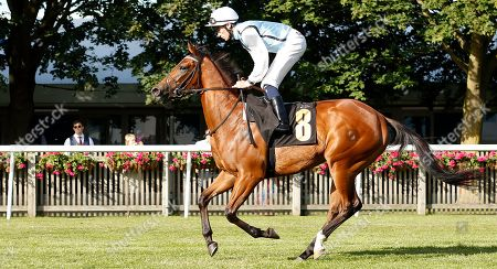 Stock Picture of ULTRA VIOLET (Kieran Shoemark) winner of The Techtrak British EBF Maiden Fillies Stakes Newmarket