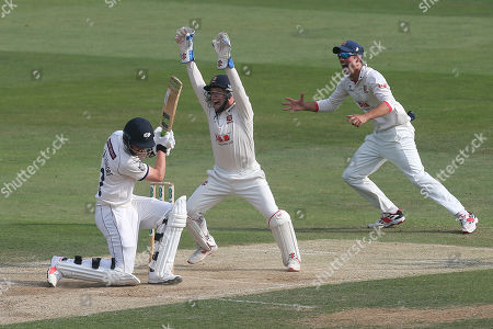 Adam Wheater of Essex celebrates as Simon Harmer of Essex claims the wicket of Tom Kohler-Cadmore during Essex CCC vs Yorkshire CCC, Specsavers County Championship Division 1 Cricket at The Cloudfm County Ground on 8th July 2019