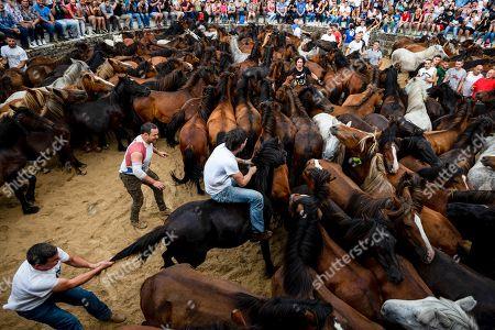 Rapa das Bestas festival Sabucedo Stock Photos (Exclusive