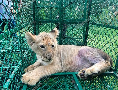 Editorial image of France Wildlife Smuggling - 10 Jul 2019