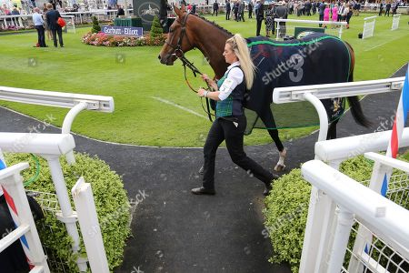MRS BOUQUET (3) ridden by Connor Beasley and trained by Mark Johnston in the Parade Ring prior to winning The Garbutt & Elliott Handicap Stakes over 5f (£15,000) during the John Smiths Cup Meeting at York Racecourse, York