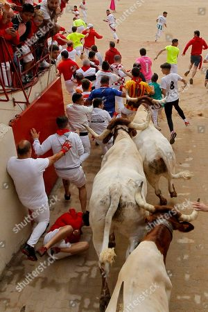 "Revellers and tamed oxen bulls arrive at the bullring during the running of the bulls at the San Fermin Festival, in Pamplona, northern Spain, . The San Fermin fiesta made internationally famous by Ernest Hemingway in his novel ""The Sun Also Rises"" draws around 1 million partygoers each year"