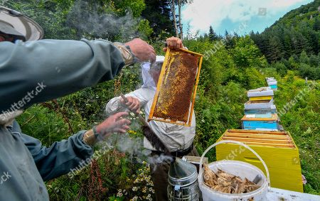 Beekeeper Goce Cakarov gives a frame full of honey to a helper who carries it to an isolated room where the frame is cleaned of wax and with the help of a centrifuge the honey is separated from the frame during this year's first honey extraction from beehives situated next to the mountaineer?s home Karadzica (altitude of 1450m) on the mountain Jakupica, 45km south of Skopje, Republic of North Macedonia, 25 July 2019. Goce Cakarov manages the mountaineer home Karadzice and also keeps more than 50 beehives. Because of the high altitude, distance from any industrial or residential area (more than 40km) the honey that the bees produce belong to the category of high quality organic honey, even though it doesn?t have the certificate for organic products. According to him, a Macedonian family that has 100 beehives can produce around 1500kg of honey yearly. The high quality mountain-meadow honey is being sold for a minimal price of 8.5 euro per 0.7 litter jar, which means that the annual earnings are higher than 12,000 euro, or 20 percent higher than the average annual income of a Macedonian household. Beekeeping in North Macedonia is a rising business and is becoming an important part of modern lifestyle. A large number of young people are deciding to get into beekeeping, as stated by the president of the North Macedonian 'Beekeeping Federation' Jane Markov. According to the Ministry of Agriculture, in North Macedonia there are more than 7,000 families that work with beekeeping. The estimate of the Ministry is that in the country there were more than 240,000 beehives at the end of 2018. Depending on the weather conditions, one beehive produces from 18 up to 35 kg of honey. According to their data in 1992, North Macedonia produced more than 1,600 tons of honey. Due to the climate changes, weather conditions and the high increase in the use of pesticides, the honey production has sharply decreased. The estimate is that in 2018 the honey productin was around 400 tons.