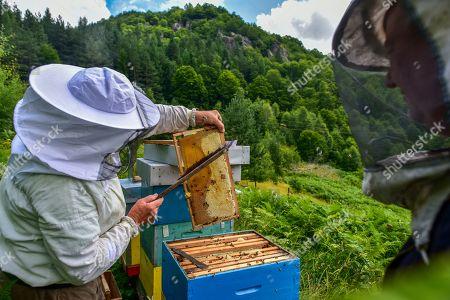 Editorial photo of Production of honey on the mountain Jakupica near Skopje, Macedonia, The Former Yugoslav Republic Of Macedonia On - 25 Jul 2019