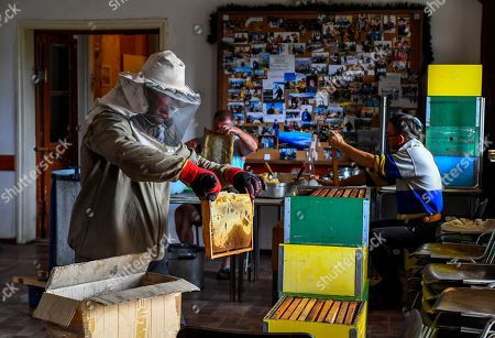 A helper of a beekeeper Goce Cakarov holds a frame full of honey in an isolated room where it is cleaned of wax and with the help of a centrifuge, the honey is separated from the frame during this year's first honey extraction from beehives situated next to the mountaineer?s home Karadzica (altitude of 1450m) on the mountain Jakupica, 45km south of Skopje, Republic of North Macedonia, 25 July 2019. Goce Cakarov manages the mountaineer home Karadzice and also keeps more than 50 beehives. Because of the high altitude, distance from any industrial or residential area (more than 40km) the honey that the bees produce belong to the category of high quality organic honey, even though it doesn?t have the certificate for organic products. According to him, a Macedonian family that has 100 beehives can produce around 1500kg of honey yearly. The high quality mountain-meadow honey is being sold for a minimal price of 8.5 euro per 0.7 litter jar, which means that the annual earnings are higher than 12,000 euro, or 20 percent higher than the average annual income of a Macedonian household. Beekeeping in North Macedonia is a rising business and is becoming an important part of modern lifestyle. A large number of young people are deciding to get into beekeeping, as stated by the president of the North Macedonian 'Beekeeping Federation' Jane Markov. According to the Ministry of Agriculture, in North Macedonia there are more than 7,000 families that work with beekeeping. The estimate of the Ministry is that in the country there were more than 240,000 beehives at the end of 2018. Depending on the weather conditions, one beehive produces from 18 up to 35 kg of honey. According to their data in 1992, North Macedonia produced more than 1,600 tons of honey. Due to the climate changes, weather conditions and the high increase in the use of pesticides, the honey production has sharply decreased. The estimate is that in 2018 the honey productin was around 400 tons.