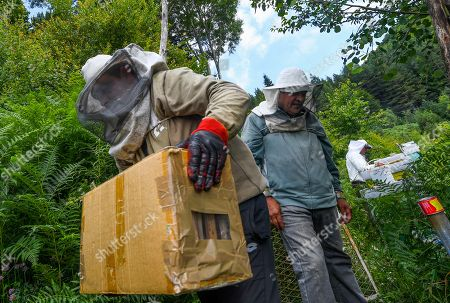A helpers of beekeeper Goce Cakarov carries the frames full of honey in a box during this year's first honey extraction from beehives situated next to the mountaineer?s home Karadzica (altitude of 1450m) on the mountain Jakupica, 45km south of Skopje, Republic of North Macedonia, 25 July 2019. Goce Cakarov manages the mountaineer home Karadzice and also keeps more than 50 beehives. Because of the high altitude, distance from any industrial or residential area (more than 40km) the honey that the bees produce belong to the category of high quality organic honey, even though it doesn?t have the certificate for organic products. According to him, a Macedonian family that has 100 beehives can produce around 1500kg of honey yearly. The high quality mountain-meadow honey is being sold for a minimal price of 8.5 euro per 0.7 litter jar, which means that the annual earnings are higher than 12,000 euro, or 20 percent higher than the average annual income of a Macedonian household. Beekeeping in North Macedonia is a rising business and is becoming an important part of modern lifestyle. A large number of young people are deciding to get into beekeeping, as stated by the president of the North Macedonian 'Beekeeping Federation' Jane Markov. According to the Ministry of Agriculture, in North Macedonia there are more than 7,000 families that work with beekeeping. The estimate of the Ministry is that in the country there were more than 240,000 beehives at the end of 2018. Depending on the weather conditions, one beehive produces from 18 up to 35 kg of honey. According to their data in 1992, North Macedonia produced more than 1,600 tons of honey. Due to the climate changes, weather conditions and the high increase in the use of pesticides, the honey production has sharply decreased. The estimate is that in 2018 the honey productin was around 400 tons.