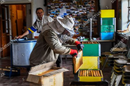 A helpers of beekeeper Goce Cakarov carries the frames full of honey in an isolated room where the frame is cleaned of wax and with the help of a centrifuge, the honey is separated from the frame during this year's first honey extraction from beehives situated next to the mountaineer?s home Karadzica (altitude of 1450m) on the mountain Jakupica, 45km south of Skopje, Republic of North Macedonia, 25 July 2019. Goce Cakarov manages the mountaineer home Karadzice and also keeps more than 50 beehives. Because of the high altitude, distance from any industrial or residential area (more than 40km) the honey that the bees produce belong to the category of high quality organic honey, even though it doesn?t have the certificate for organic products. According to him, a Macedonian family that has 100 beehives can produce around 1500kg of honey yearly. The high quality mountain-meadow honey is being sold for a minimal price of 8.5 euro per 0.7 litter jar, which means that the annual earnings are higher than 12,000 euro, or 20 percent higher than the average annual income of a Macedonian household. Beekeeping in North Macedonia is a rising business and is becoming an important part of modern lifestyle. A large number of young people are deciding to get into beekeeping, as stated by the president of the North Macedonian 'Beekeeping Federation' Jane Markov. According to the Ministry of Agriculture, in North Macedonia there are more than 7,000 families that work with beekeeping. The estimate of the Ministry is that in the country there were more than 240,000 beehives at the end of 2018. Depending on the weather conditions, one beehive produces from 18 up to 35 kg of honey. According to their data in 1992, North Macedonia produced more than 1,600 tons of honey. Due to the climate changes, weather conditions and the high increase in the use of pesticides, the honey production has sharply decreased. The estimate is that in 2018 the honey productin was around 400 tons.