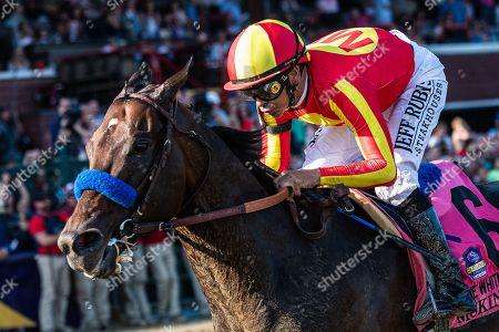 Horse Racing 03 Aug 2019 Stock Photos (Exclusive)   Shutterstock