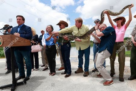A group of people hold a 12-ft. python as Florida Gov. Ron DeSantis, left, speaks during a news conference at Everglades Holiday Park, in Fort Lauderdale, Fla. DeSantis said the state is expanding its efforts to eradicate invasive pythons in the Everglades and is working with the federal government to get snake hunters to remote areas of Big Cypress National Preserve