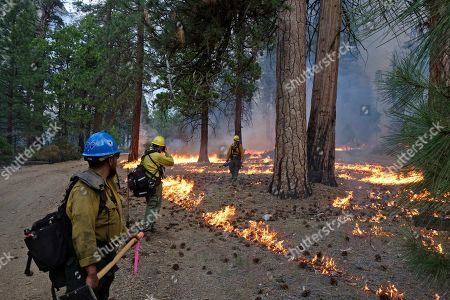 Stock Photo of Firefighter Andrew Pettit, right, walks among the flames in Cedar Grove as fire ecologist Tony Caprio, center, take a photo and firefighter Julio Campos looks on during a prescribed fire in Kings Canyon National Park, Calif. The prescribed burn, a low-intensity, closely managed fire, was intended to clear out undergrowth and protect the heart of Kings Canyon National Park from a future threatening wildfire. The tactic is considered one of the best ways to prevent the kind of catastrophic destruction that has become common, but its use falls woefully short of goals in the West