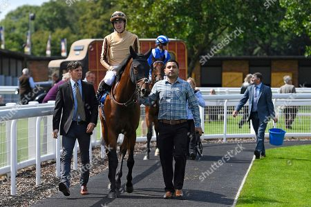 Winner of The M J Church Novice Stakes,Aluquair ridden by James Doyle and trained by Simon Crisford is led into the Parade Ring during Horse Racing at Salisbury Racecourse on 15th August 2019