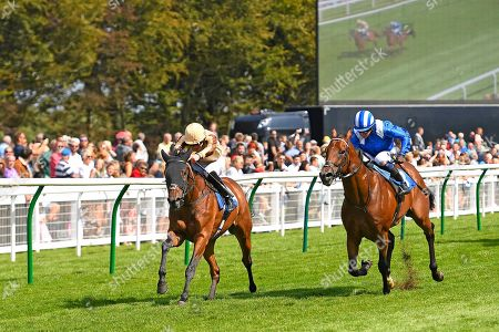 Winner of The M J Church Novice Stakes, Aluquair ridden by James Doyle and trained by Simon Crisford  during Horse Racing at Salisbury Racecourse on 15th August 2019