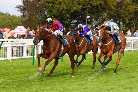 Stock Image of Winner of The Kevin Hall & Pat Boakes Memorial Handicap Land of Oz ridden by Ryan Tate and trained by Sir Mark Prescott  during Horse Racing at Salisbury Racecourse on 15th August 2019