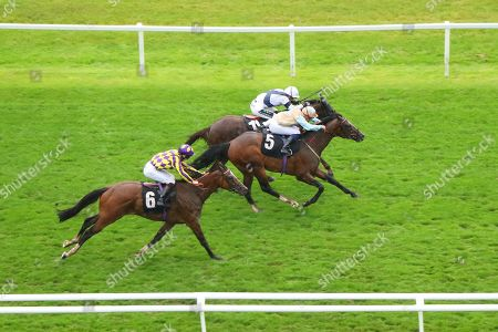 Editorial photo of Horse Racing - 16 Aug 2019