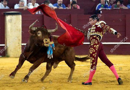 Spanish bullfighter Jose Maria Manzanares fights a bull as part Malaga's Fair at La Malagueta bullring, in Malaga, southern Spain, 17 August 2019.