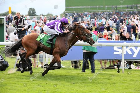 JAPAN (8) ridden by Ryan Moore and trained by Aidan O'Brien (nearside)  winning The Group 1 Juddmonte International Stakes over 1m 2f (£1,062,500) from CRYSTAL OCEAN (2) ridden by James Doyle in a Photograph Finish during the Ebor Festival at York Racecourse, York