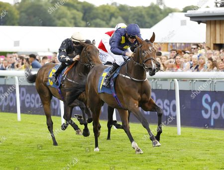 Stock Photo of Al Rasmah and Tony Hamilton win the Sportpesa/EBF Fillies Conditions Stakes at Chester.