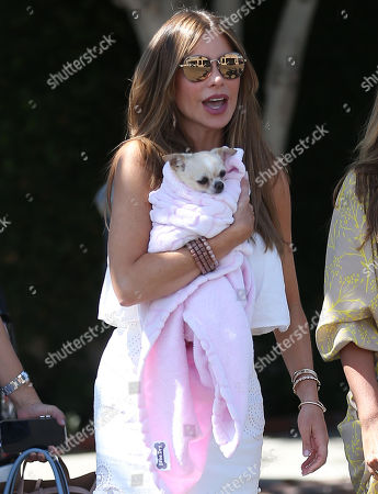Sofia Vergara takes her dog Baguette to the vet then went to meet her friends on Melrose Avenue