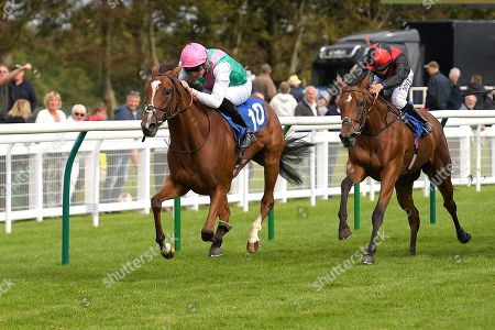 Stock Image of Winner of The Bob McCreery Memorial EBF Quidhampton Maiden Fillies' Stakes, Snow Shower ridden by James Doyle and trained by Sir Michael Stoute  during Racing at Salisbury Racecourse on 5th September 2019