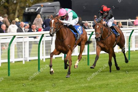 Stock Photo of Winner of The Bob McCreery Memorial EBF Quidhampton Maiden Fillies' Stakes, Snow Shower ridden by James Doyle and trained by Sir Michael Stoute  during Racing at Salisbury Racecourse on 5th September 2019