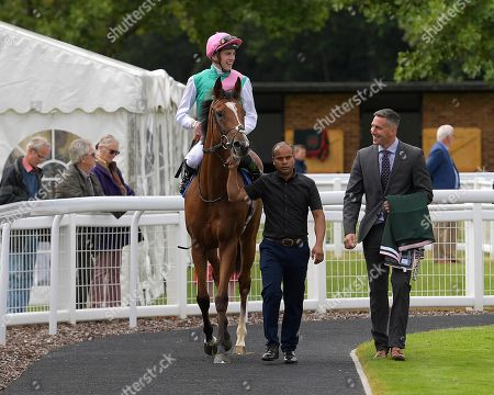 Stock Picture of Winner of The Bob McCreery Memorial EBF Quidhampton Maiden Fillies' Stakes, Snow Shower ridden by James Doyle and trained by Sir Michael Stoute is led into the Winner's enclosure during Racing at Salisbury Racecourse on 5th September 2019