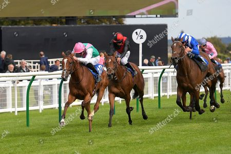 Winner of The Bob McCreery Memorial EBF Quidhampton Maiden Fillies' Stakes, Snow Shower ridden by James Doyle and trained by Sir Michael Stoute during Racing at Salisbury Racecourse on 5th September 2019