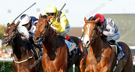 Stock Picture of QAYSAR (right, Pat Dobbs) beats BAYROOT (centre) and BALTIC BARON (left) in The P J Towey Construction Ltd Handicap Doncaster