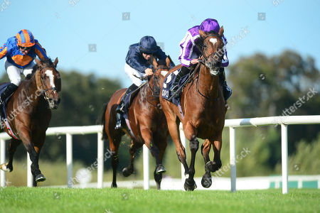 LEOPARDSTOWN. QIPCO Irish Champion Stakes (Group 1). MAGICAL and Ryan Moore win for trainer Aidan O'Brien.