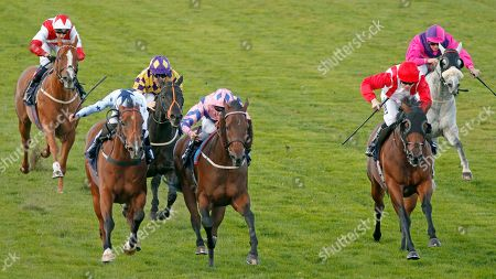 Stock Photo of HAN SOLO BERGER (centre, Tom Queally) beats EXCELLENT GEORGE (left) and FOXY FOREVER (right) in The Injured Jockeys Fund Handicap Yarmouth