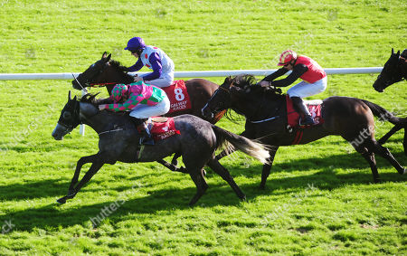 Stock Image of GALWAY STORMY TALE and Ben Coen win the James P Cunningham Electrical Handicap.