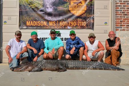 Stock Image of In this, photo, provided by the Mississippi Department of Wildlife, Fisheries and Parks, Brandon Griggs, Marvin Griggs, Paul Edwards, Taylor Criddle, Hunter Griggs, and James Boyd pose in Madison, Miss., with a state record-tying alligator they caught earlier that day. The 10-foot-long female tied the record for longest female alligator caught in public waters, and the photo was taken after the record was certified. In all, hunters harvested 918 alligators in public waters this year, 1a53 more than last year, according to Ricky Flynt of the state's Department of Wildlife, Fisheries and Parks