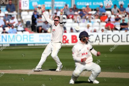 Stock Photo of Simon Harmer of Essex celebrates taking the wicket of Ben Foakes during Essex CCC vs Surrey CCC, Specsavers County Championship Division 1 Cricket at The Cloudfm County Ground on 18th September 2019