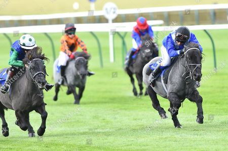 (R) Briar Smokey Joe, ridden by Zak Kent, wins The Shetland Pony Grand National Flat Race in aid of Bob Champion Cancer Trust & Supported by Shadwell, from (L) Cranford Fantastic, ridden by Lucas Murphy.