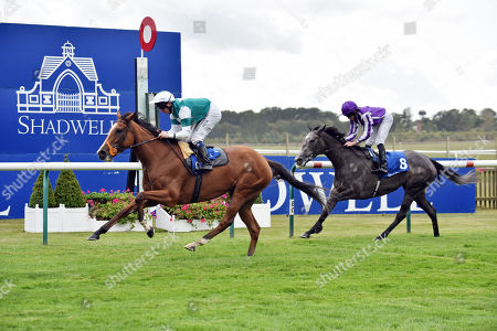 Stock Image of , Newmarket, Spirit of Appin with Martin Dwyer up wins Princess Anne Stakes at Newmarket, Rowley Mile racecourse, GB.