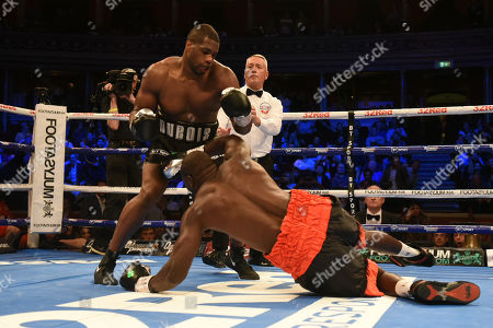 Daniel Dubois (black shorts) defeats Ebenezer Tetteh during a Boxing Show at the Royal Albert Hall on 27th September 2019