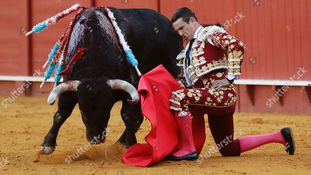 Stock Picture of Spanish bullfighter Jose Maria Manzanares fights with his first bull during a bullfight held at the Real Maestranza de Caballeria bullring in Seville, Spain, 28 September 2019.