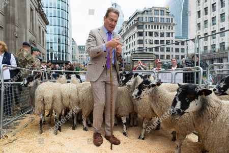Michael Portillo poses with a flock of North of England Mules on London Bridge.