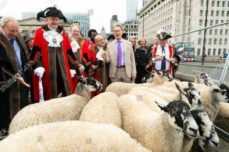 Michael Portillo leads a flock of North of England Mules across London Bridge.