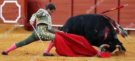 Stock Image of Spanish bullfighter Julian Lopez 'El Juli' fights with a bull during a bullfight held at the Real Maestranza de Caballeria bullring in Seville, Spain, 29 September 2019.