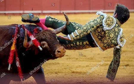 Stock Photo of Spanish bullfighter Julian Lopez 'El Juli' is tossed a bull during a bullfight held at the Real Maestranza de Caballeria bullring in Seville, Spain, 29 September 2019.