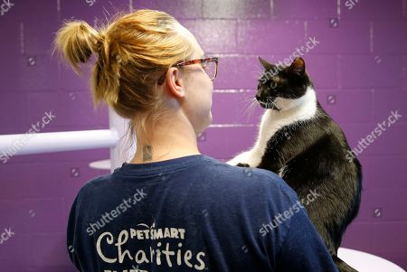 Stock Image of PetSmart groomer Ashley Jones volunteers by trimming cats nails at The Tucson Human Society during PetSmart Week of Service at on in Tucson, Ariz
