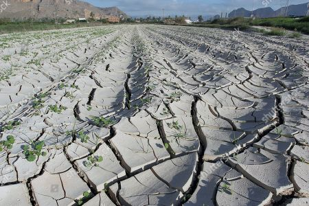 A general view of a field in Orihuela suffering from extreme drought due to the lack of rain in Orihuela, eastern Spain, 10 October 2019. The drought followed a period of severe rainfall and floods the previous month.