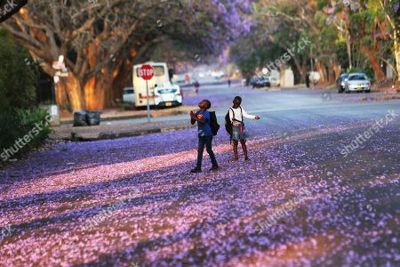 Stock Photo of Children play underneath Jacaranda trees lining a street in the capital Harare, Zimbabwe, Friday, Oct, 11, 2019. Zimbabwe now has the world's second highest inflation after Venezuela, according to International Monetary Fund figures. The economy has been on a downward spiral for more than a year as hopes fade that Mugabe's successor and former deputy, President Emmerson Mnangagwa, will deliver on his promises of prosperity