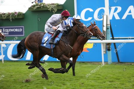 Stock Image of AL RUFAA (1) ridden by Robert Havlin and trained by John Gosden winning The Join The Coral Bet&Get Club ebfstallions.com Novice Stakes over 7f (£15,000)  during the York Coral Sprint Trophy meeting at York Racecourse, York